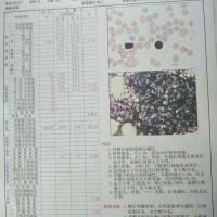 魏明宇_全血细胞减少_证明材料